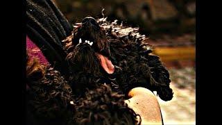 Akasya Durağı - Melahat Abla Bir Köpekciğin Hayatını Kurtardı