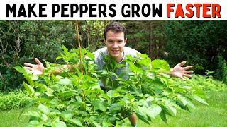 Make Peppers Grow Faster! (Improve Growth & Ripening Rates) - Pepper Geek