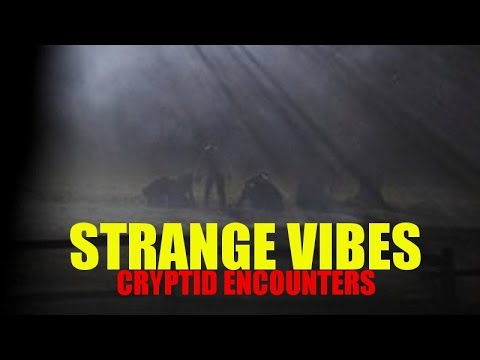 'Strange Vibes: Cryptid Encounters' | Paranormal Stories
