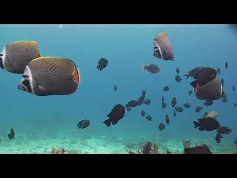 Beautiful Underwater Marine Life Pacific Ocean Scientific Study Educational Video