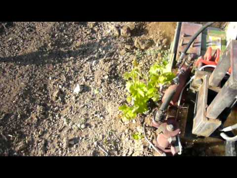 Growing vines whith radius Καλλιέργεια αμπελιού