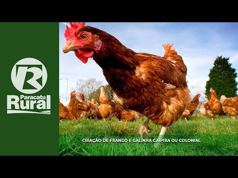PARACATU RURAL 28 02 16 (programa completo)