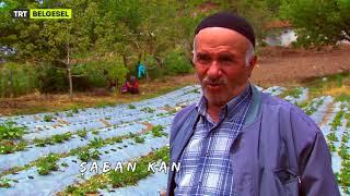 Çiftçinin Dürüstlüğü ve Şehirden Köye Yerleşen Birinin Ona Bakışı