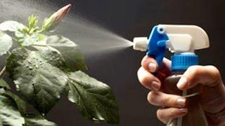 видео Вредители комнатных растений: как бороться?