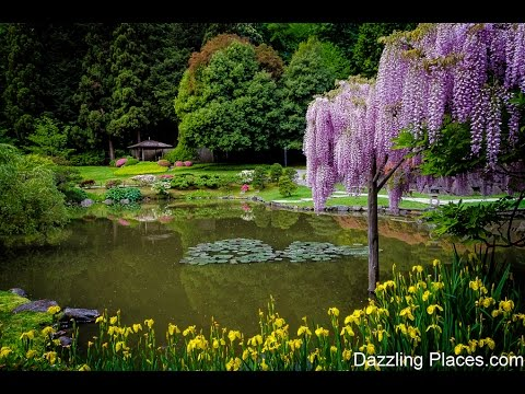 A May Visit to the Japanese Garden in Seattle's Washington Park Arboretum