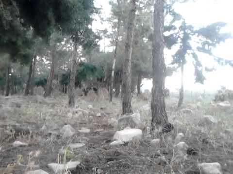 В тёмно-синем лесу.....съёмка под прикрытием!