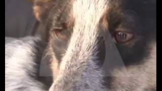 В красноярском зооприюте нашли сожженные трупы животных
