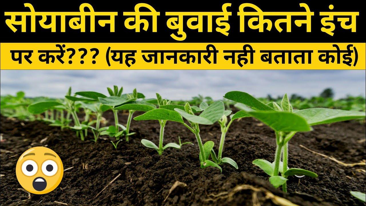 सोयाबीन की बुवाई कितने इंच पर करें |Soybean Sowing | लाइन से लाइन की दूरी | सोयाबीन की खेती