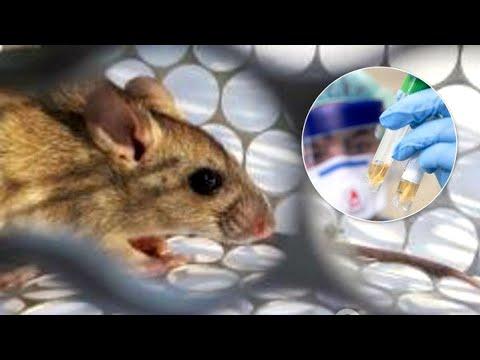 Хантавирус: грозит ли миру очередная пандемия?