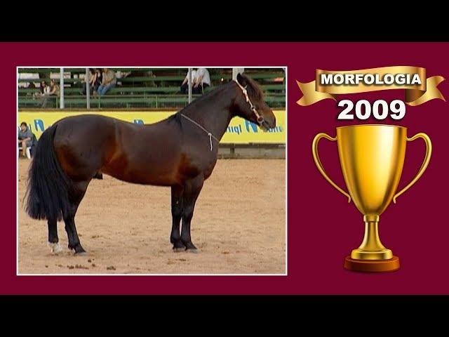 NOSTALGIA MORFOLOGIA 2009