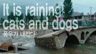 It is raining cats and dogs - 폭우가 내리다