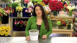 Color of Spring Tulips Garden Care & Handling Tips