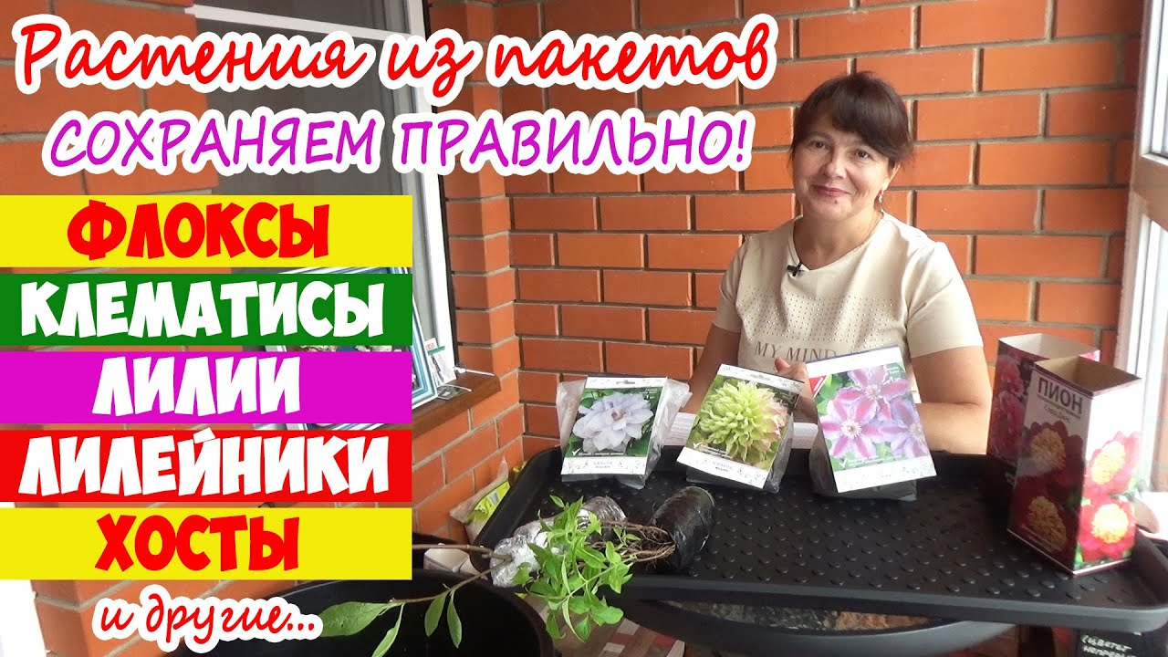 Почему погибают растения из пакетов и коробок? Клематисы, Лилейники, Лилии, Флоксы, Хосты, Пионы...