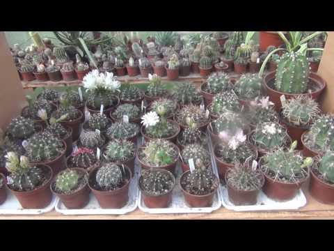 Кактусы виды фото, кактусы в картинках, фотографии кактусов