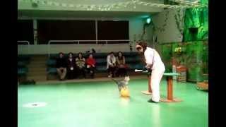 那須動物王国 http://www.nasu-oukoku.com/ で開催されているザ・キャッ...