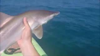Wildman Crowe Catches a 3 ft Bull Shark in Costa Rica Kayak Fishing
