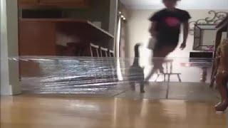 Неудачный пранк с кошкой│Woman's prank on cat backfires