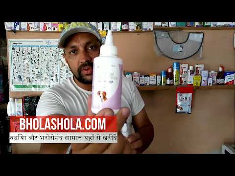 Pet Care  - How To Clean Your Dog Ear - Bhola Shola