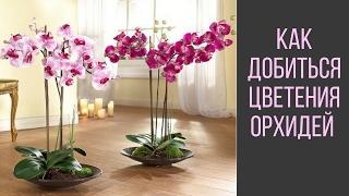Как Добиться Цветения Орхидей(, 2015-02-12T07:21:33.000Z)