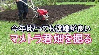 機嫌が良いマメトラ農機のマメトラ君・畑を掘る