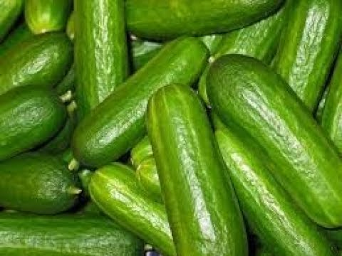 Diseases in Cucumber cultivation