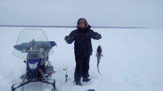 Рыбалка на Динго Т150