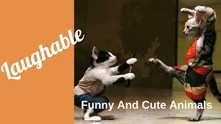 Funny and Cute Animals #2 |Funny Animal Videos