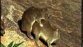 Animal Sex Serengeti