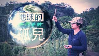【預告】路殺獵殺犬殺毒殺 台灣最後貓科滅絕邊緣