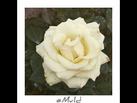 Mvld1