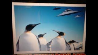 Gambar cover Perche' il pinguino imperatore e'il mio animale totem
