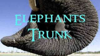 Elephants Trunk ~Original Song By Guitar Ran~