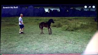 baby horse rears and kicks stupid human badly trained foals turns out to be dangerous horse