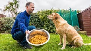Enseñar A Un Perro A Comer A La Orden Y Esperar Tranquilo Youtube