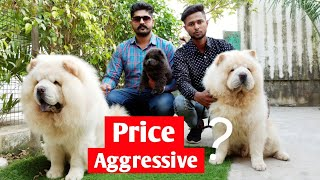 Imported and Champion chow chow dogs || Param Chow chow kennel || About Chow Chow dog ||
