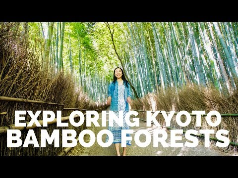 KYOTO BAMBOO FORESTS & HOT SPRINGS IN HAKONE