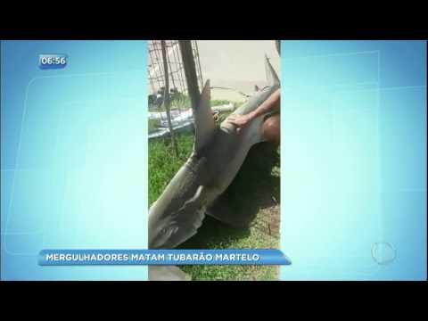 Mergulhadores matam tubarão martelo e abandonam na calçada