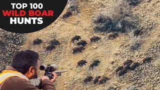 TOP 100 WILD BOAR HUNTS  EN İYİ 100 DOMUZ AVI  CHASSE AU SANGLIER