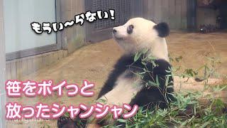 2019/8/22 笹をポイっと放ったシャンシャン^^; もうご馳走様ですか? Giant Panda Xiang Xiang