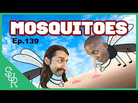 Learn about mosquitoes // 蚊 // Speak UP Radio [Ep.139]