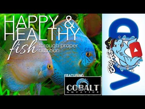 Proper Fish Nutrition ft. Cobalt Aquatics | BigAlsPets.com