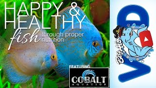 Proper Fish Nutrition ft. Cobalt Aquatics | BigAlsPets.com