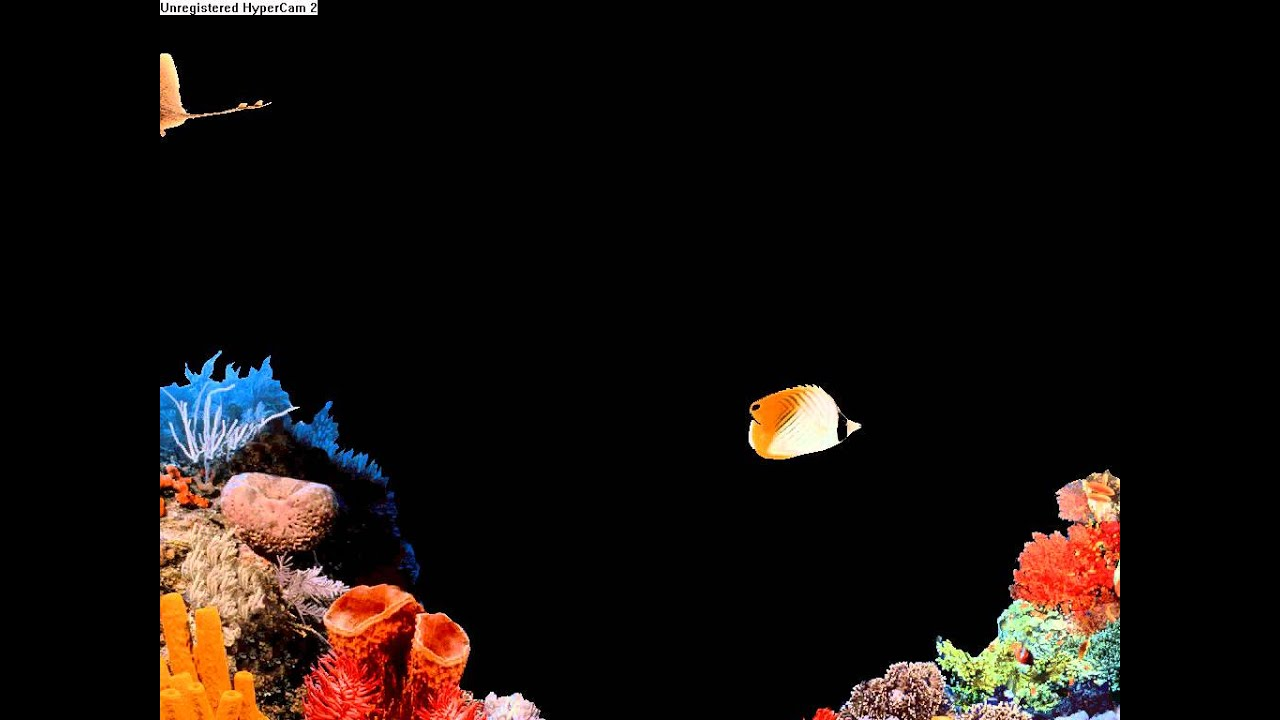 Fish aquarium screensaver for xp - Fish Aquarium Screensaver For Xp