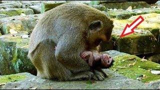 So Nice! Youngest Mom DeeDee Million Love Newborn Delena, DD Looks Very Happy And Smile