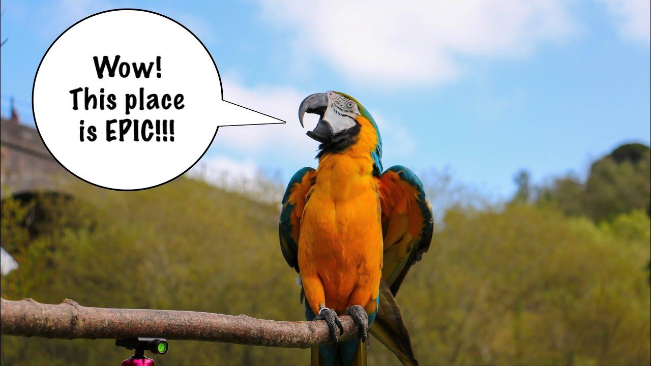 The Peak District Parrot Adventures | Free Flight Meet-up Vacation!