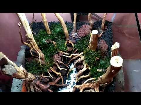 membuat-tema-hutan-aquascape-untuk-pemula-#part2-#planting-tanaman