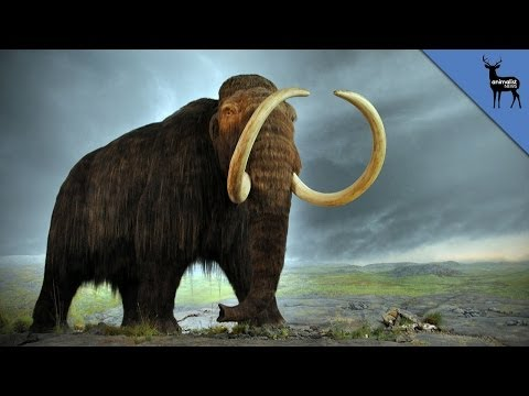 Wooly Mammoths Might Be Coming Back to Life!
