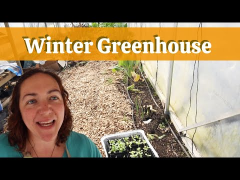 Growing vegetables in a greenhouse in winter