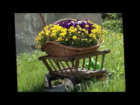Анютины глазки, наперстянка, турецкая гвоздика  Эти цветы всегда будут в моде