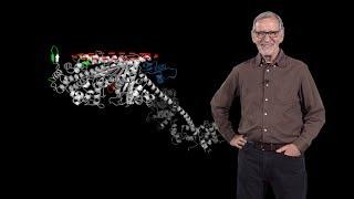 James Spudich (Stanford) 4: Myosin mutations and hypertrophic cardiomyopathy